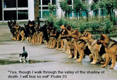 As I walk through the valley of the shadow of death...